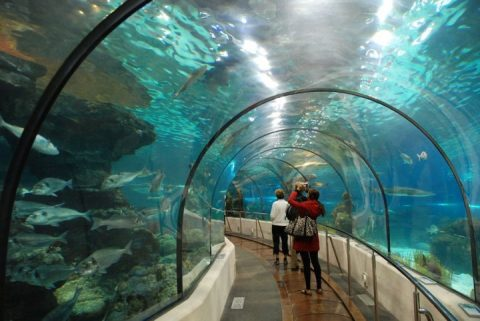 aquarium-barcelona-spain-720x482